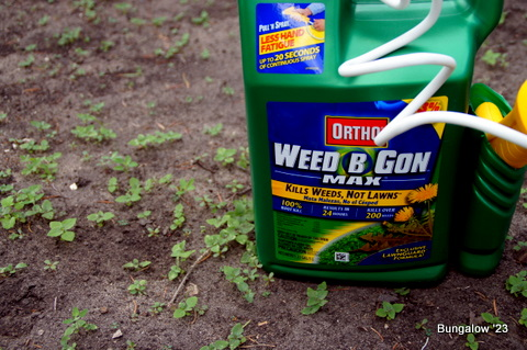 weed killer in garden area